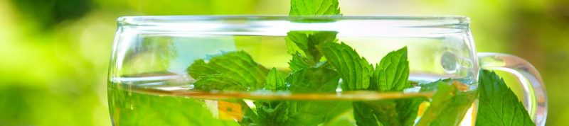 Teekuren bringen körperliche Fitness
