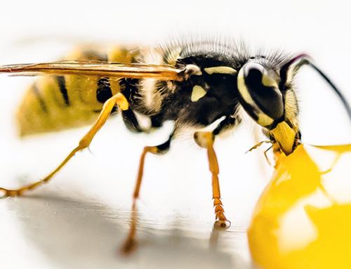 Tipps von Oma gegen lästige Wespen